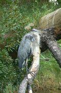 Kory Aversa Horses Assateague Chincoteague Bald Eagle 2